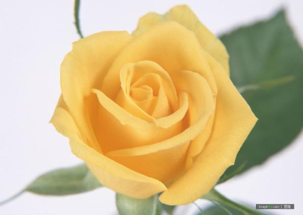 关于忍耐的说说:--在爱情中,爱是忍耐、爱是包容,所以爱才会长久。